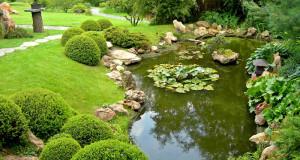 Растения для украшения фонтана или пруда
