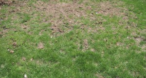 Борьба с болезнями и вредителями газона