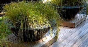 Растения в вазах и контейнерах