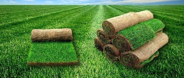 Рулонный газон на участке