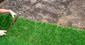 Выкладываем рулонный газон