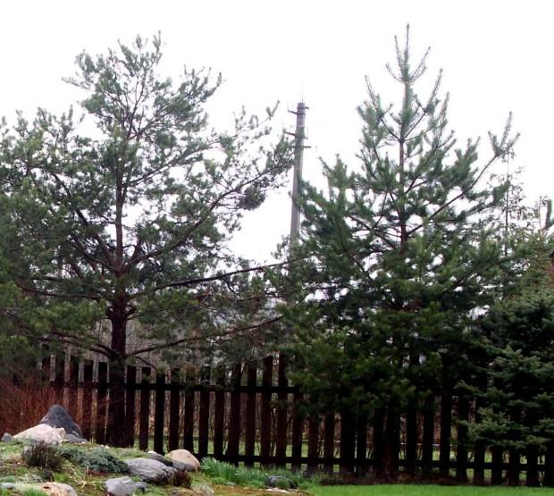 Где нельзя сажать деревья
