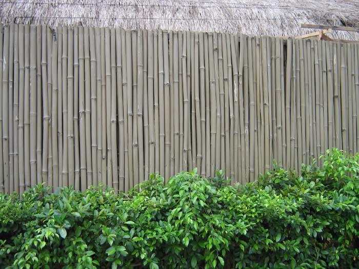 Изгородь из бамбука